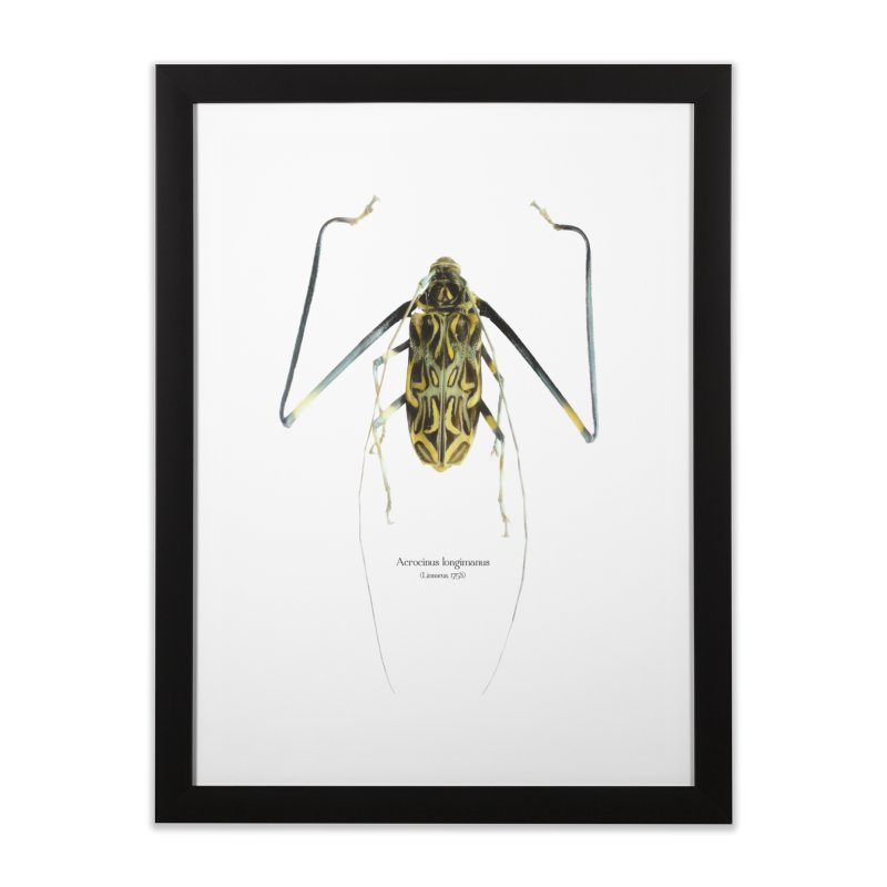 Acrocinus II Home Framed Fine Art Print by Gerónimo Martín Alonso Photography