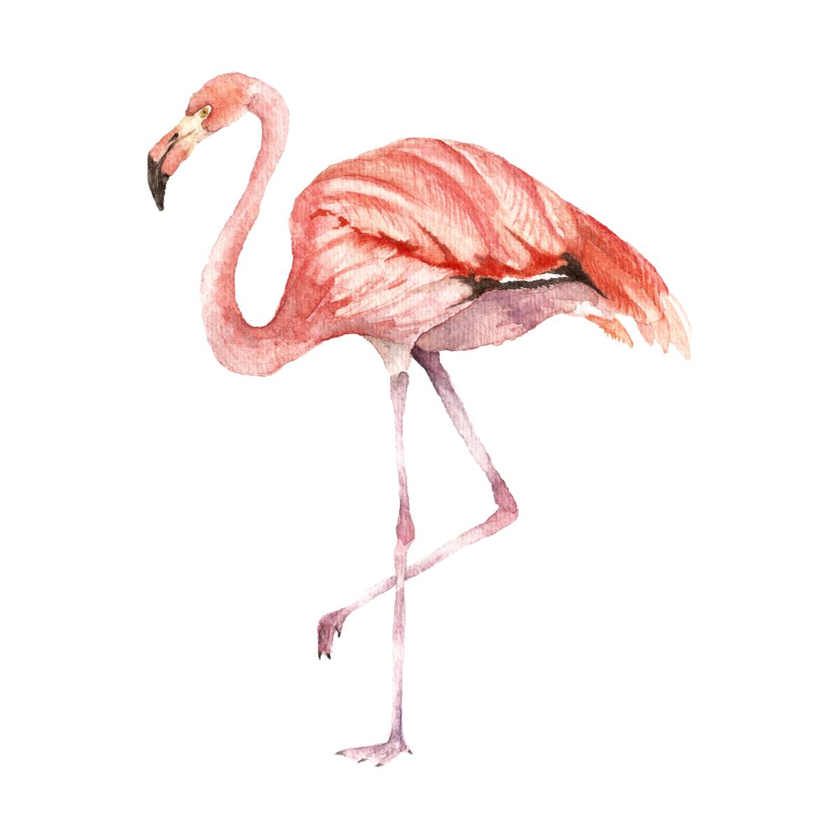 наручные фламинго фото рисунков стала пить