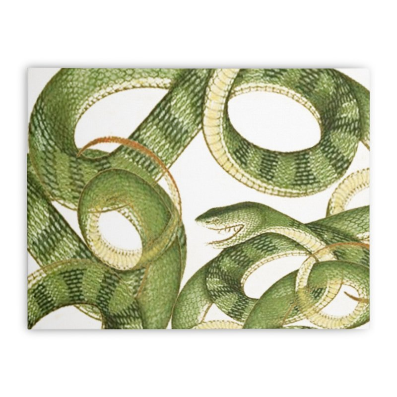 Green Snake Tangle Home Stretched Canvas by Green Grackle Studio