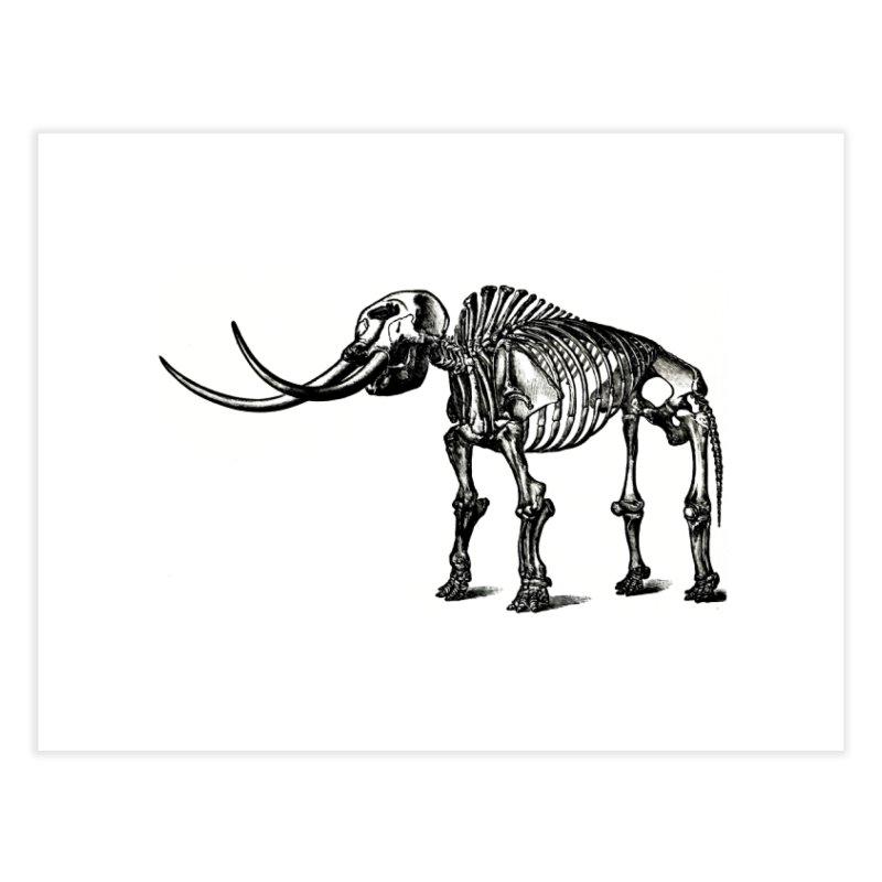 Mammoth Skleleton Home Fine Art Print by Green Grackle Studio