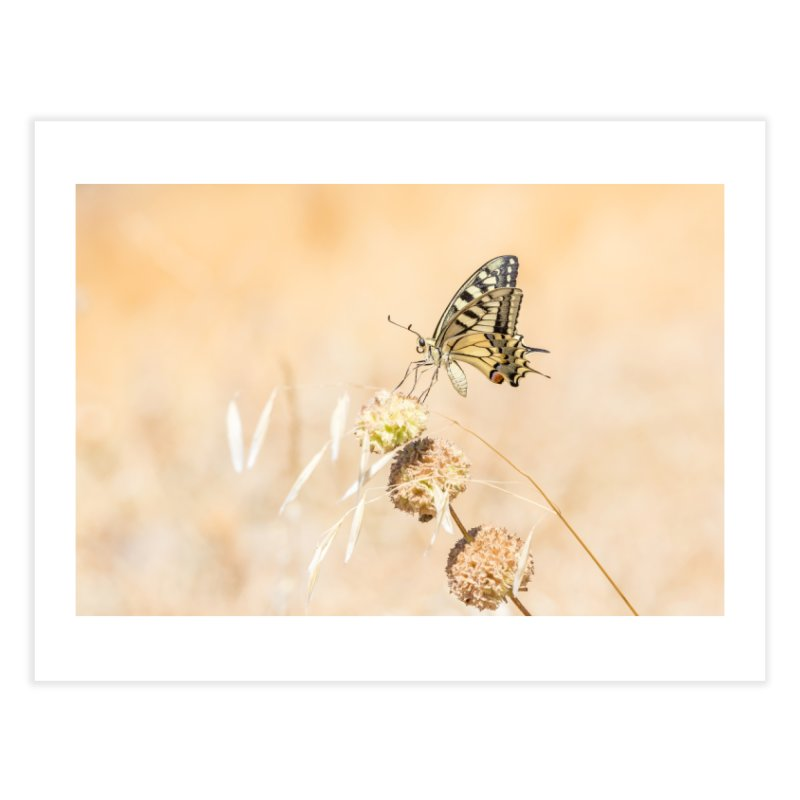 Fragile beauty of swallowtail butterfly Home Fine Art Print by heilimo's Artist Shop