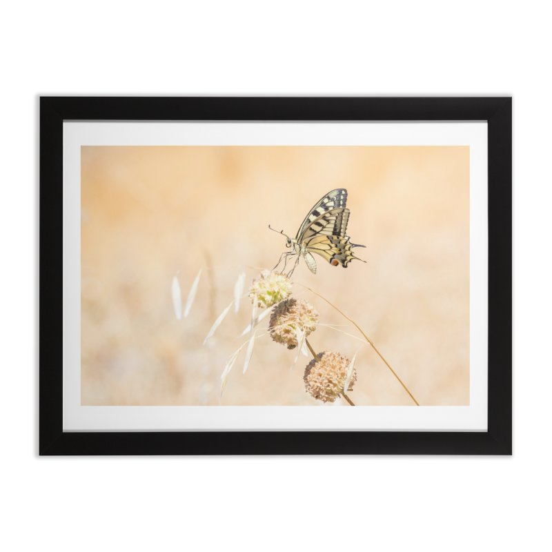 Fragile beauty of swallowtail butterfly Home Framed Fine Art Print by heilimo's Artist Shop