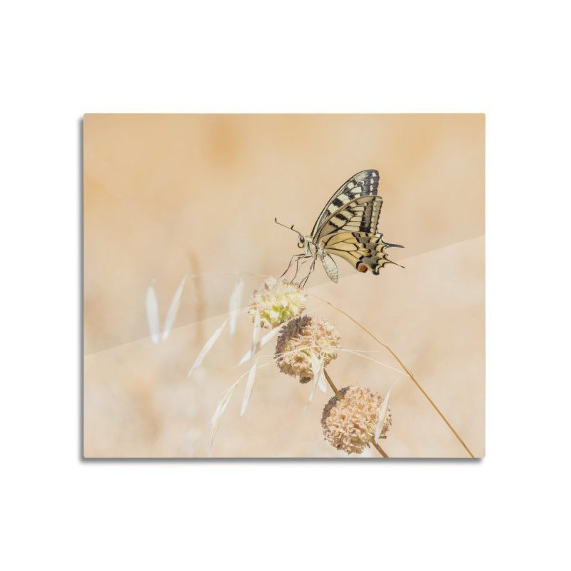 Fragile beauty of swallowtail butterfly Home Mounted Aluminum Print by heilimo's Artist Shop