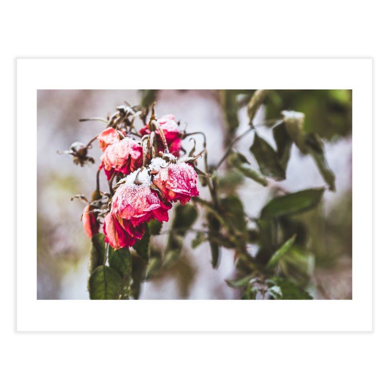 Frozen red roses Home Fine Art Print by heilimo's Artist Shop