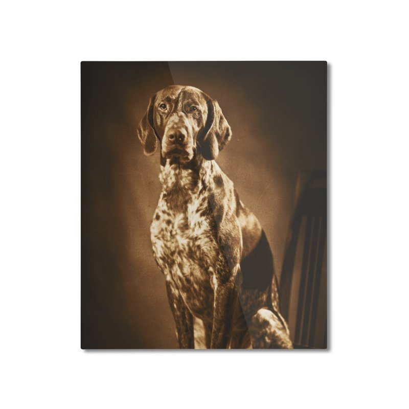 German shorthaired pointer vintage portrait Home Mounted Aluminum Print by heilimo's Artist Shop