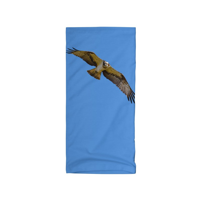 Flying osprey with a target in sight (cutout with blue background) Accessories Neck Gaiter by heilimo's Artist Shop