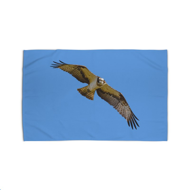 Flying osprey with a target in sight (cutout with blue background) Home Rug by heilimo's Artist Shop
