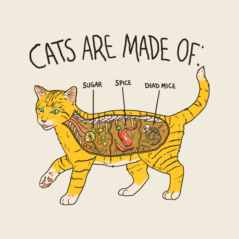 Cat Anatomy by Hillary White