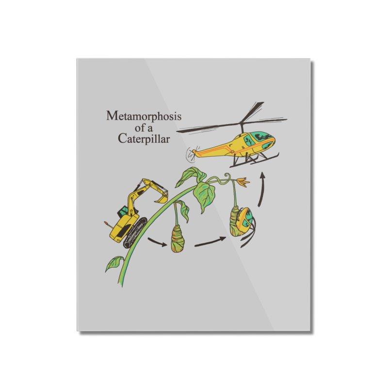 Metamorphosis of a Caterpillar Home Mounted Acrylic Print by hillarywhiterabbit's Artist Shop