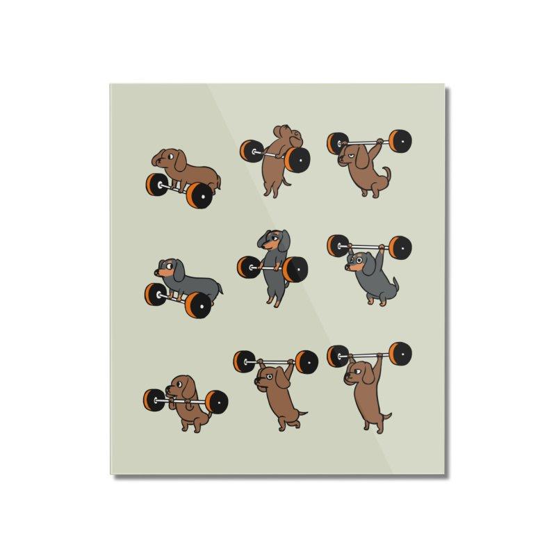 Olympic Lifting Dachshund Home Mounted Acrylic Print by huebucket's Artist Shop