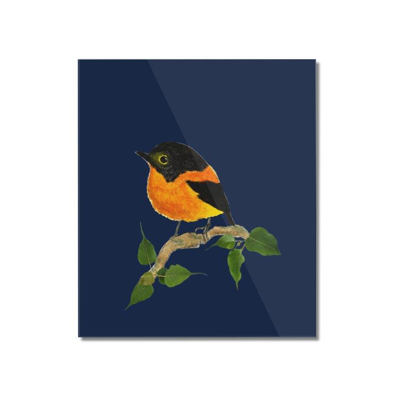 Orange FlyCatcher Home Mounted Acrylic Print by Hue Hub