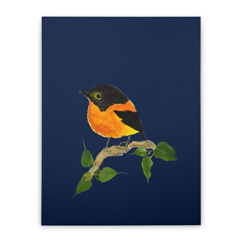 Orange FlyCatcher Home Stretched Canvas by Hue Hub
