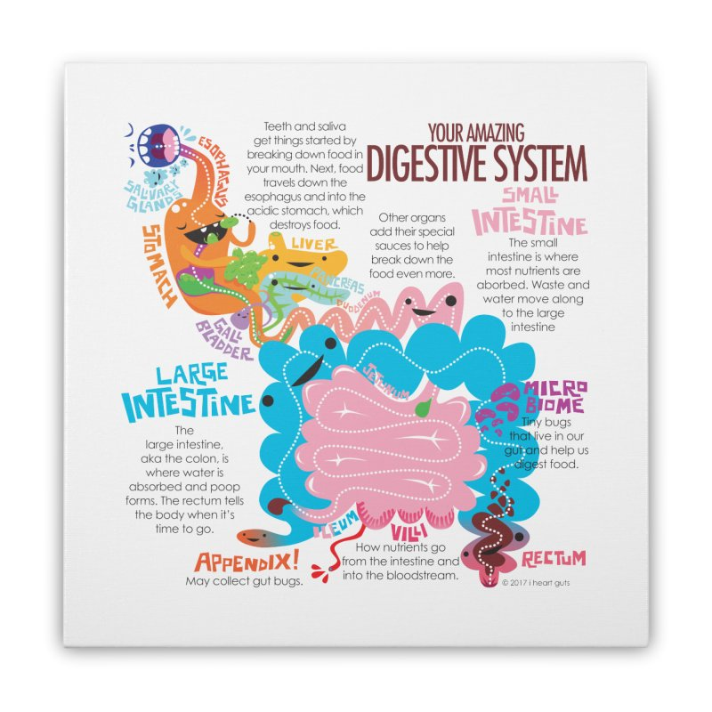 Your Amazing Digestive System Home Stretched Canvas by I Heart Guts