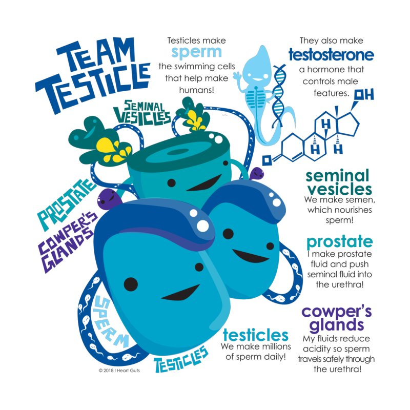 Team Testicle Accessories Notebook by I Heart Guts