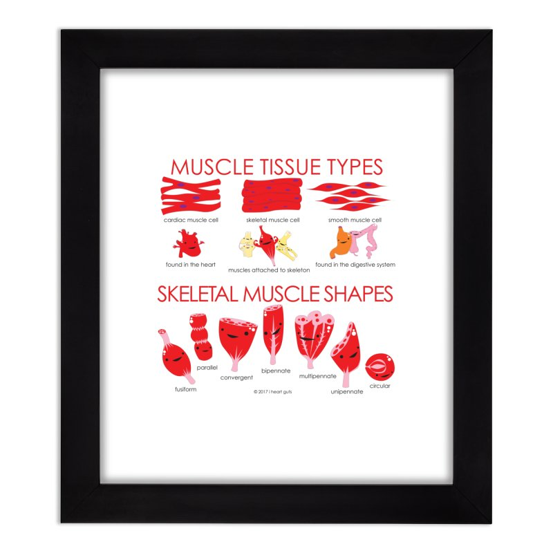 Muscle Types and Shapes Home Framed Fine Art Print by I Heart Guts