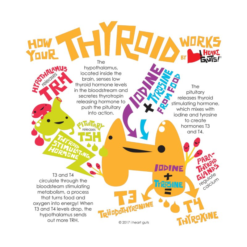 How Your Thyroid Works Home Fine Art Print by I Heart Guts