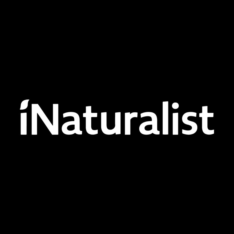 iNaturalist Logo in all white Accessories Hat by iNaturalist Store