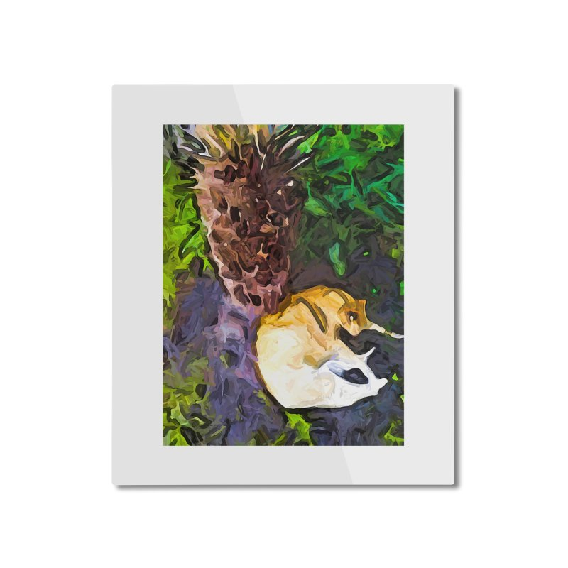 The Sleeping Cat and the Dead Tree Fern Home Mounted Aluminum Print by jackievano's Artist Shop