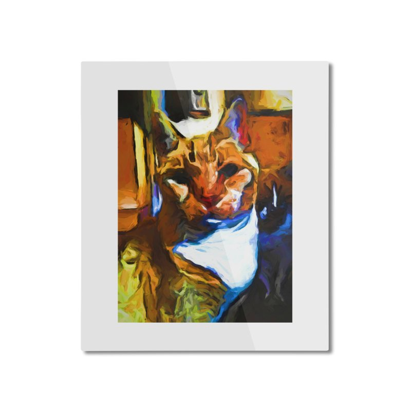 Cats in Shadows and Light Home Mounted Aluminum Print by jackievano's Artist Shop
