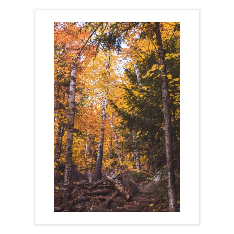 Birch Forest Home Fine Art Print by Jelly Designs