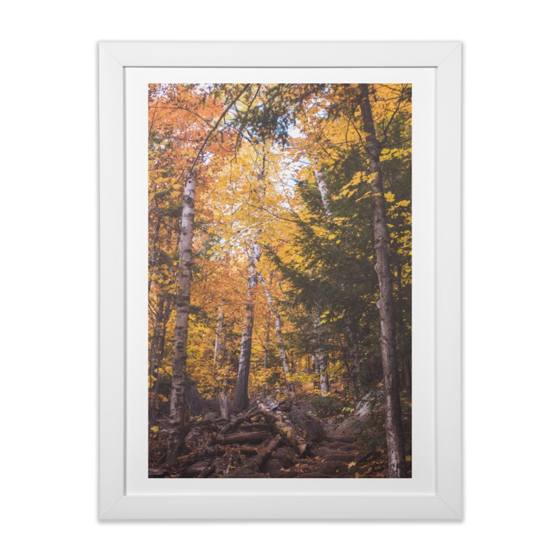 Birch Forest Home Framed Fine Art Print by Jelly Designs