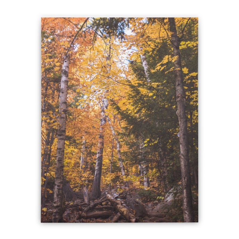 Birch Forest Home Stretched Canvas by Jelly Designs