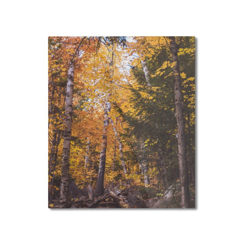 Birch Forest Home Mounted Aluminum Print by Jelly Designs