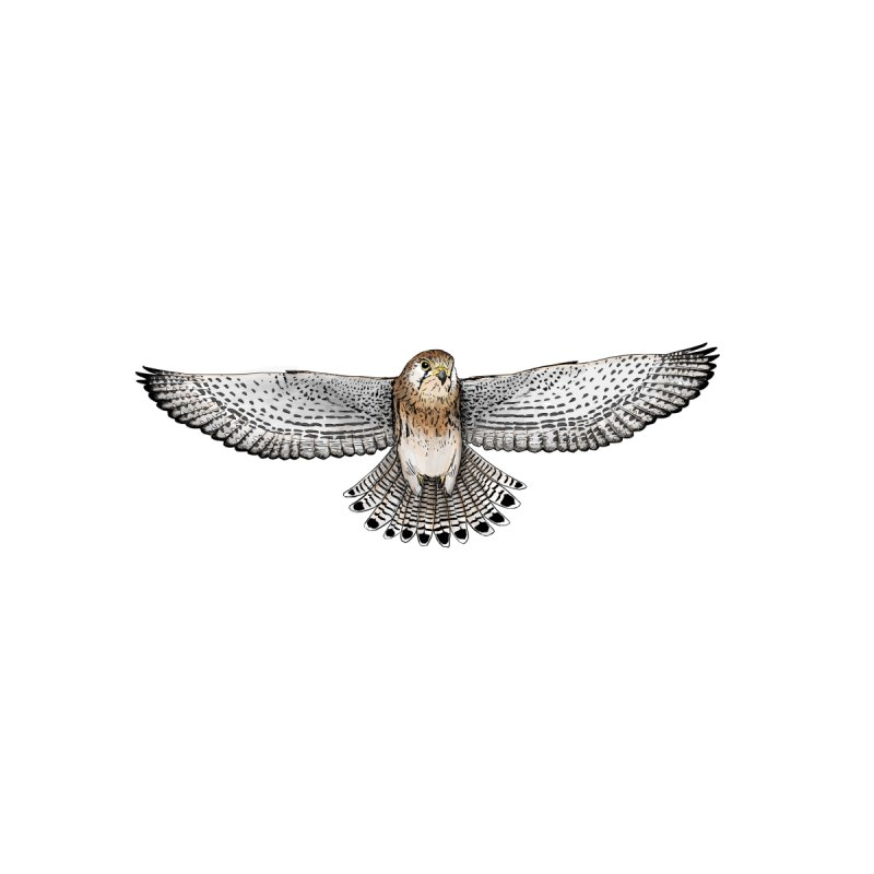 Kestrel Home Fine Art Print by jenbackman's Artist Shop