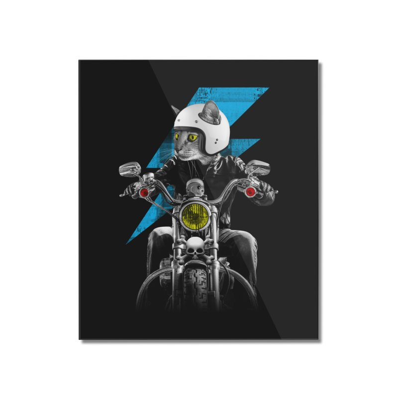 Biker Cat Home Mounted Acrylic Print by Joe Conde