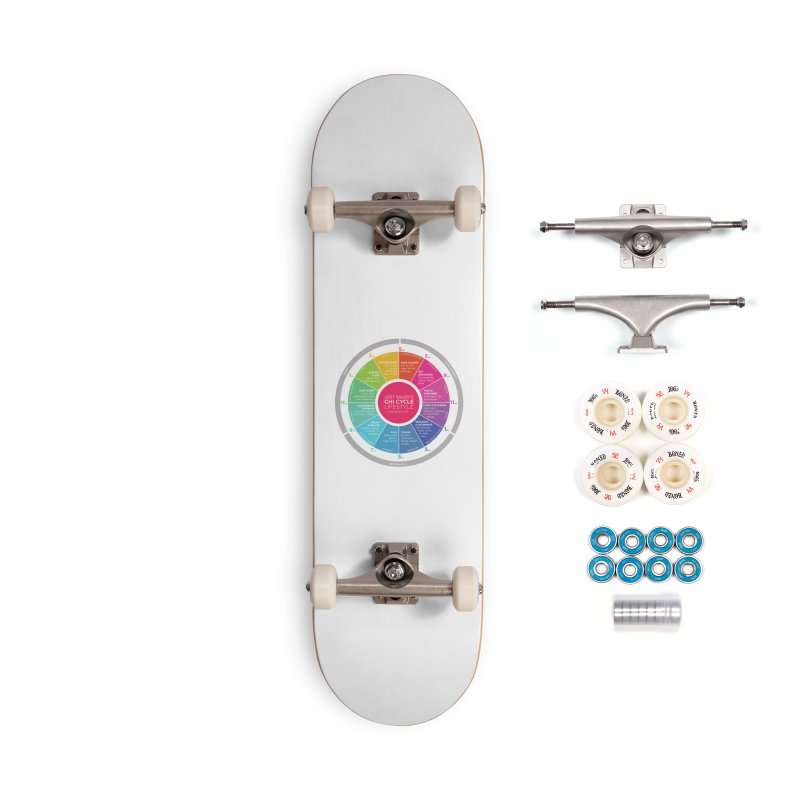Chi Cycle Wheel Accessories Complete - Premium Skateboard by Jost Sauer Chi Cycle Lifestyle