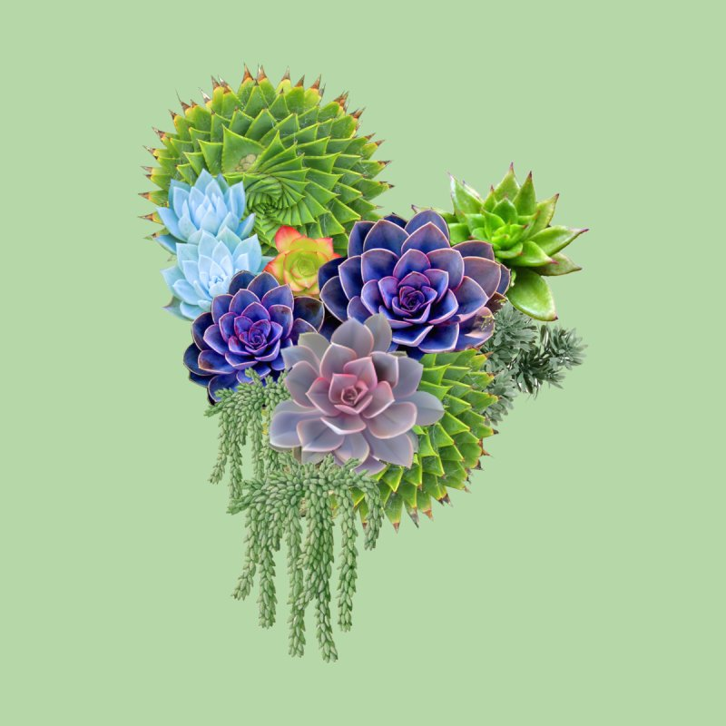 Succulent Story by NadineMay Artist Shop