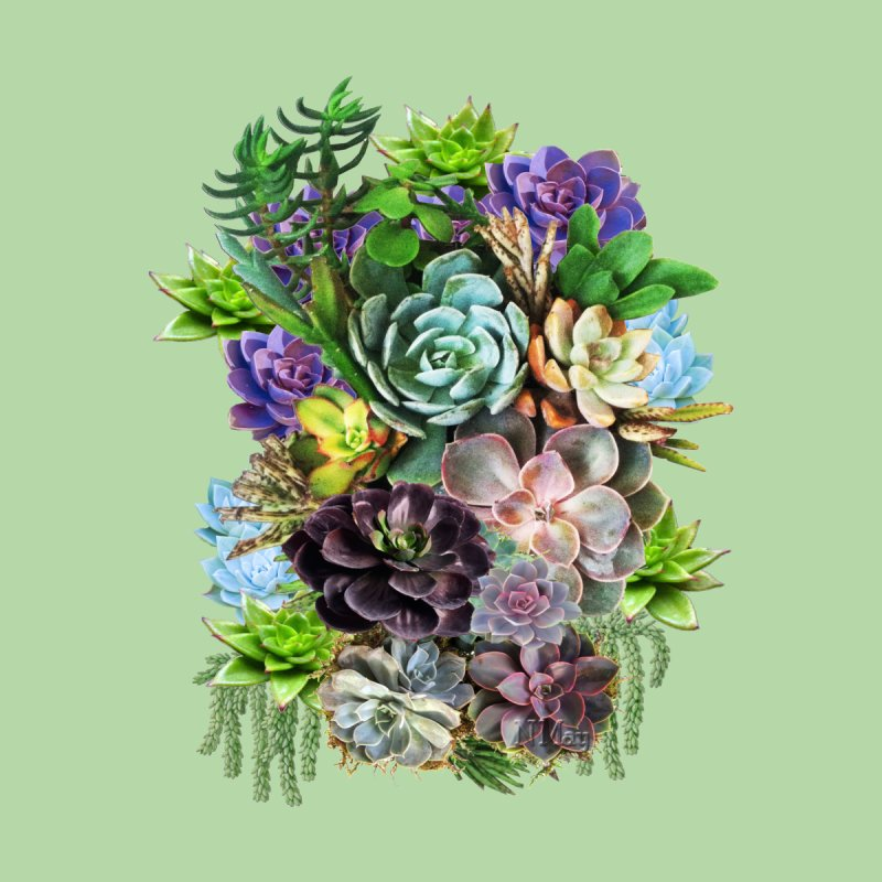 Succulent arraingement Women's Fitted T-Shirt by justkidding's Artist Shop