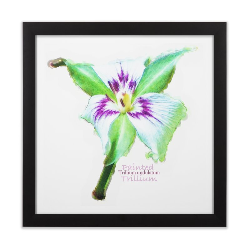 Trillium undulatum Home Framed Fine Art Print by Of The Wild by Kimberly J Tilley