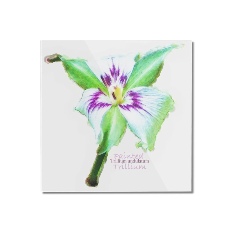 Trillium undulatum Home Mounted Acrylic Print by Of The Wild by Kimberly J Tilley