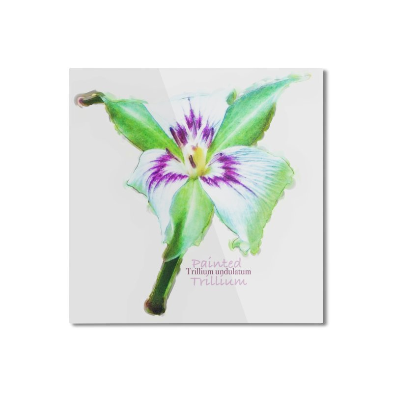 Trillium undulatum Home Mounted Aluminum Print by Of The Wild by Kimberly J Tilley