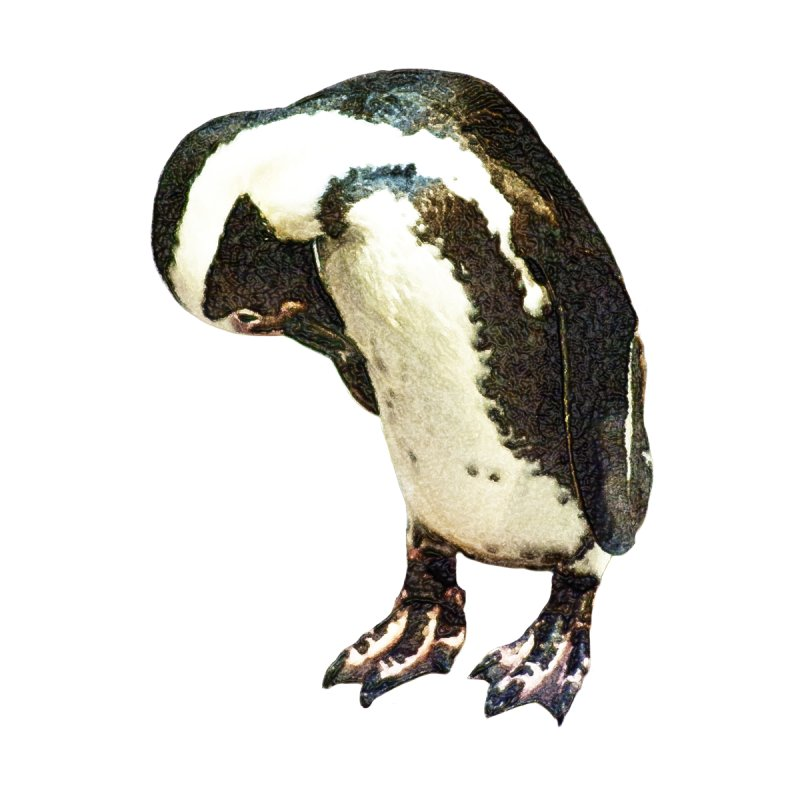Magellanic Penguin by Of The Wild by Kimberly J Tilley