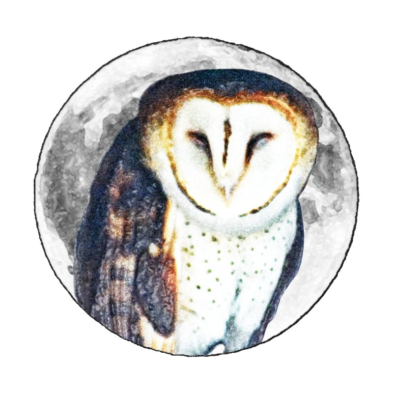 Tyto alba Home Fine Art Print by Of The Wild by Kimberly J Tilley