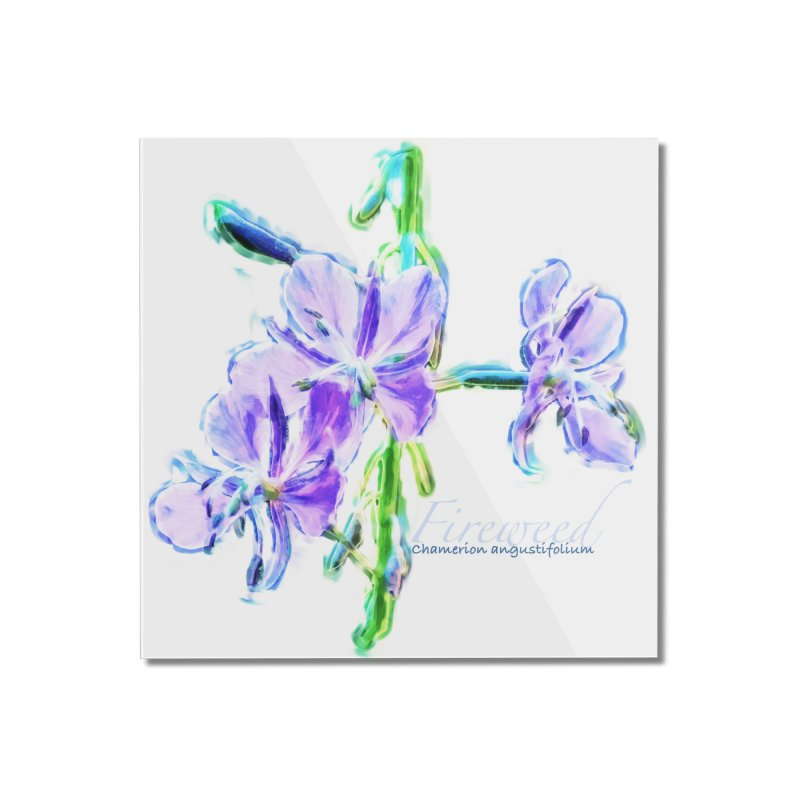 Fireweed Home Mounted Acrylic Print by Of The Wild by Kimberly J Tilley