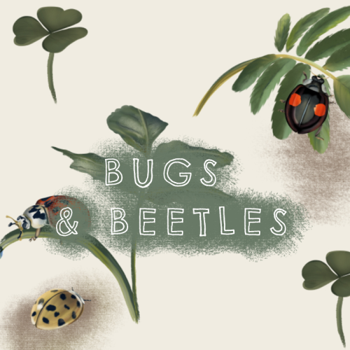 Bugs-And-Beetles