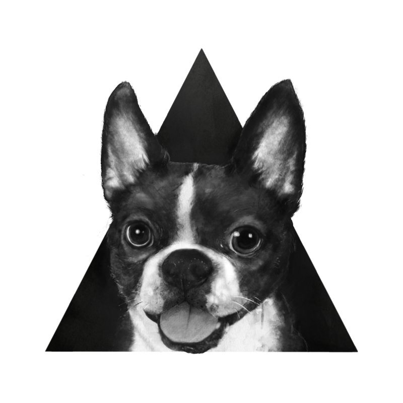 boston terrier None  by lauragraves's Artist Shop