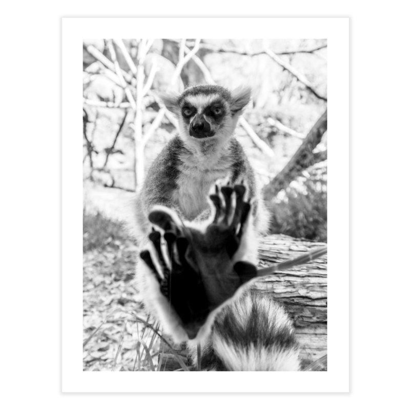 Lemur. Cool. Unframed Fine Art Print. Home Fine Art Print by Lemur. Cool.