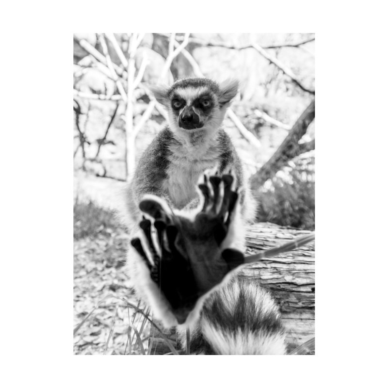 Lemur. Cool. Framed Fine Art Print. Home Framed Fine Art Print by Lemur. Cool.