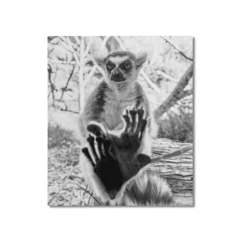 Lemur. Cool. Mounted Aluminum Print. Home Mounted Aluminum Print by Lemur. Cool.