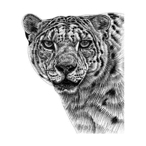 Design for Snow leopard big cat - ink illustration