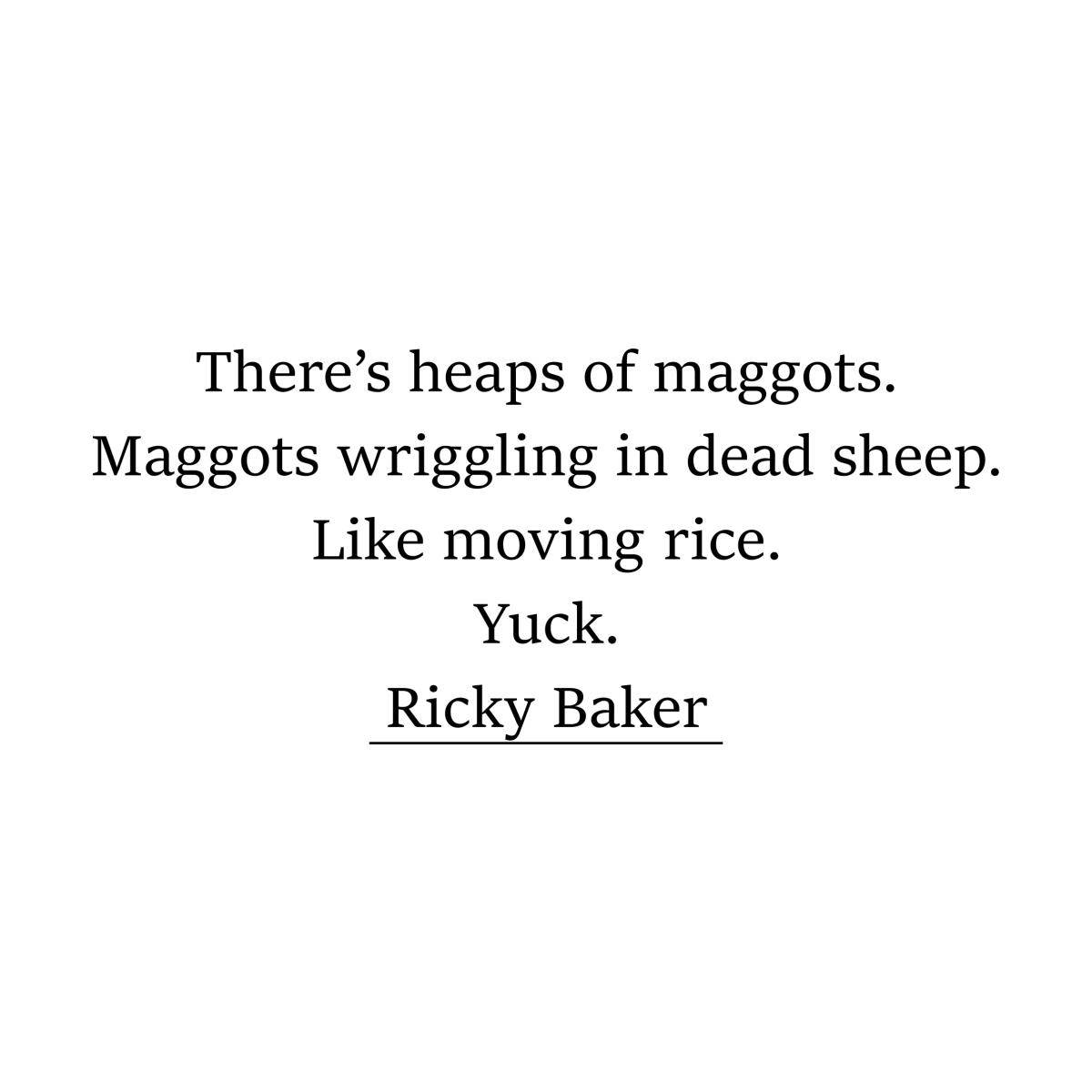 Haiku about Maggots