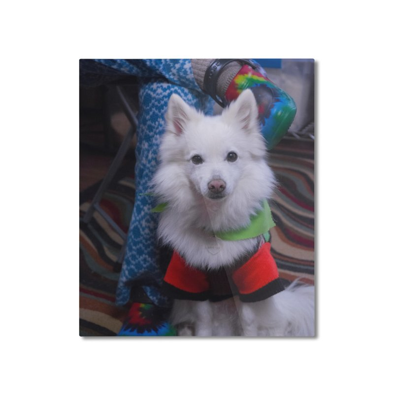 Joey The Magical Dog Colorful Home Mounted Aluminum Print by Joey The Magical Dog