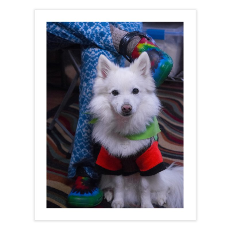 Joey The Magical Dog Colorful Home Fine Art Print by Joey The Magical Dog