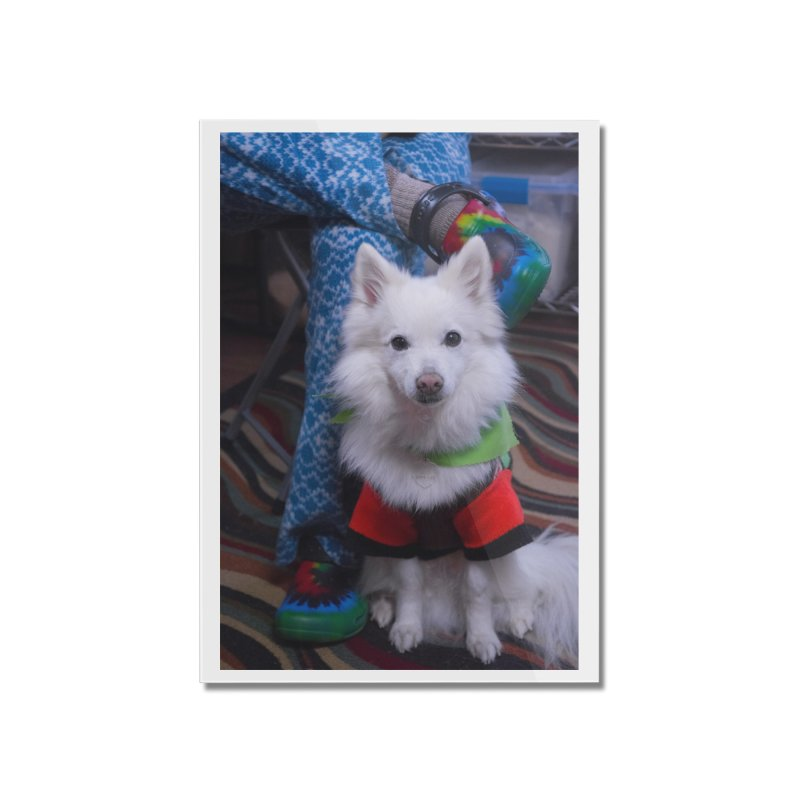 Joey The Magical Dog Colorful Home Mounted Acrylic Print by Joey The Magical Dog