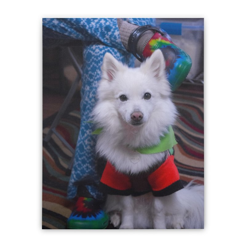 Joey The Magical Dog Colorful Home Stretched Canvas by Joey The Magical Dog