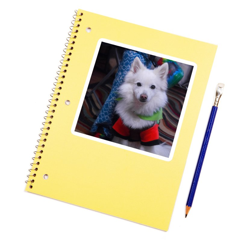 Joey The Magical Dog Colorful Accessories Sticker by Joey The Magical Dog